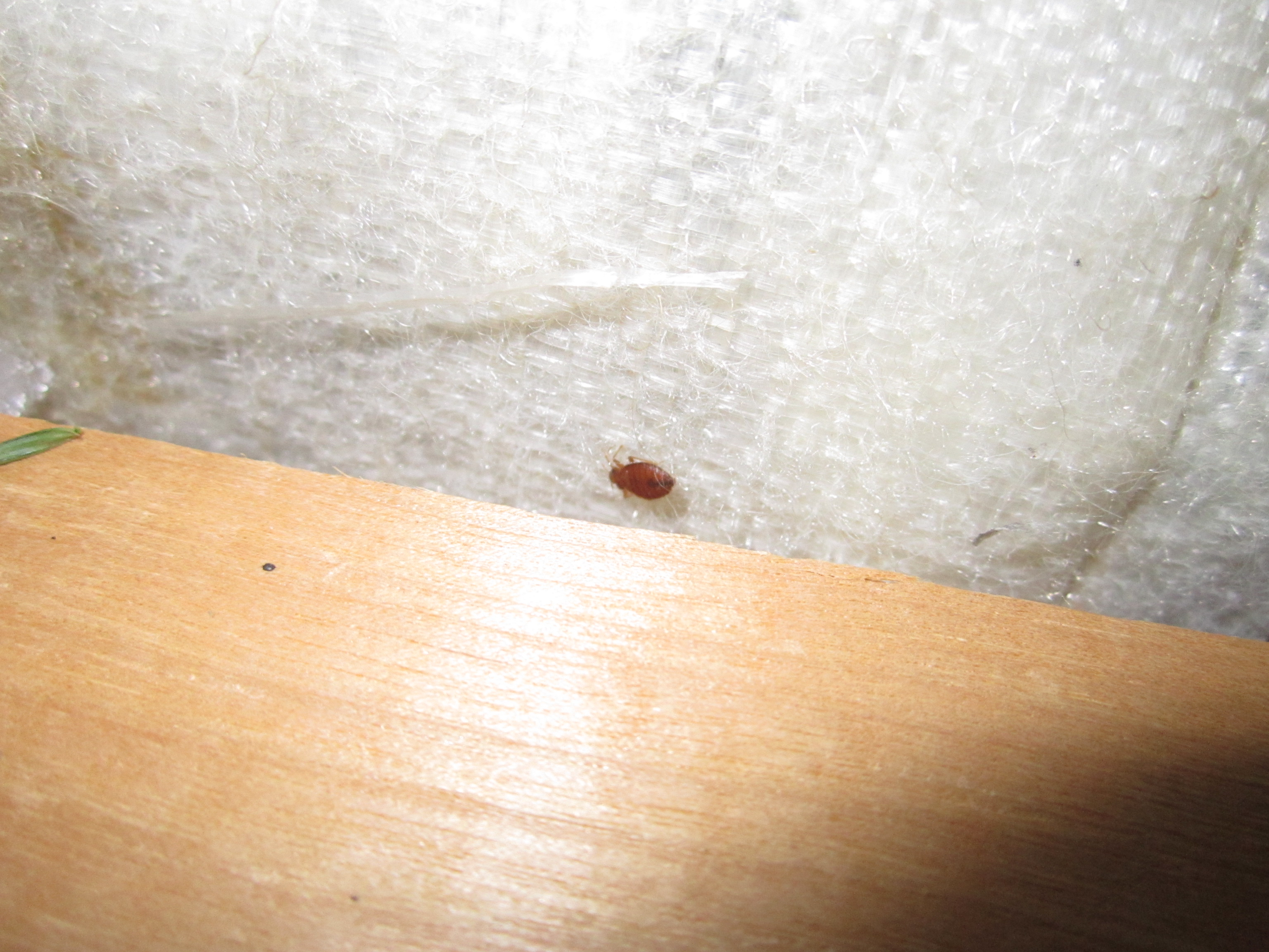 How to spot bedbug infested garbage – Things I find in the